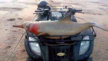 Cazaron y torturaron a un delfín atándolo a un cuatriciclo