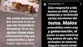 La China Suárez denunció maltrato animal en un zoológico: ¿de Comodoro?