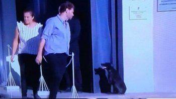 la perra de emiliano sala estuvo durante horas en la puerta del velatorio