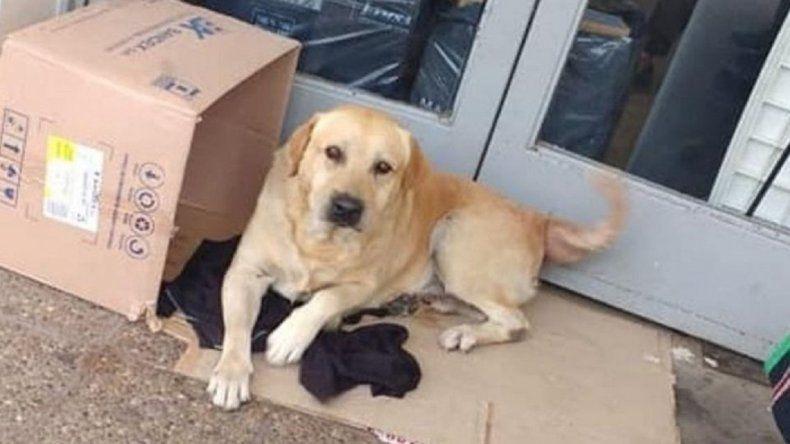 Un perro sigue esperando a su dueño que murió en el hospital