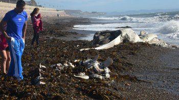 Personas que paseaban por el paseo costero descendieron hasta la playa para observar de cerca los restos del cetáceo.