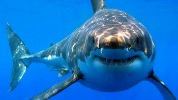 asesinan a balazos a un tiburon luego de cazarlo