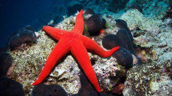 cientificos buscan metodos para no causarles dolor a animales marinos