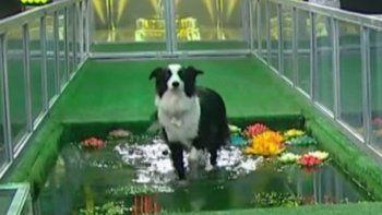 Un perro chubutense esta noche participa por el millón en Otra noche familiar