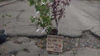 plantaron arboles en baches como modo de reclamo