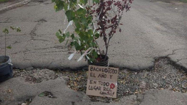 Plantaron árboles en baches como modo de reclamo