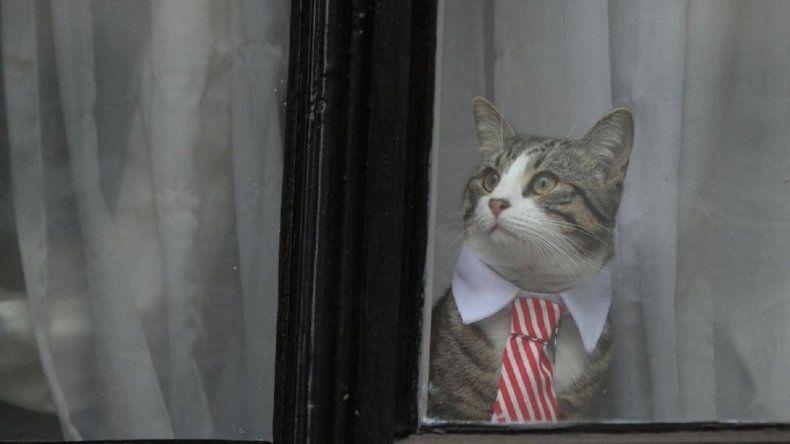 El gato de Julian Assange huyó y burló a la policía