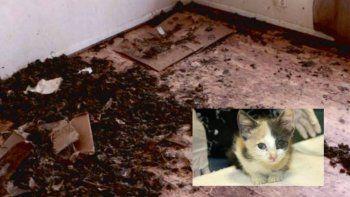 mujer vivia hacinada junto a 88 gatos, un perro y un pez