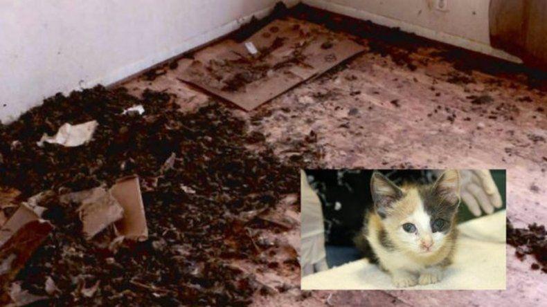 Mujer vivía hacinada junto a 88 gatos, un perro y un pez