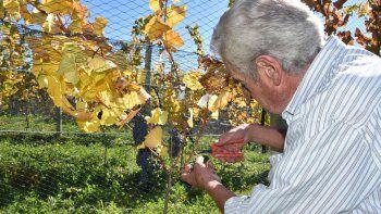 la vendimia invita a vivir la cosecha de la uva desde adentro