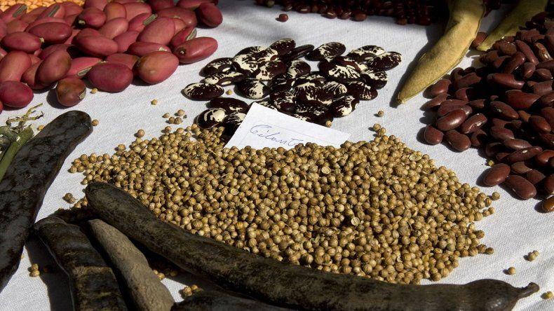 Legumbres, uno de los alimentos más nutritivos