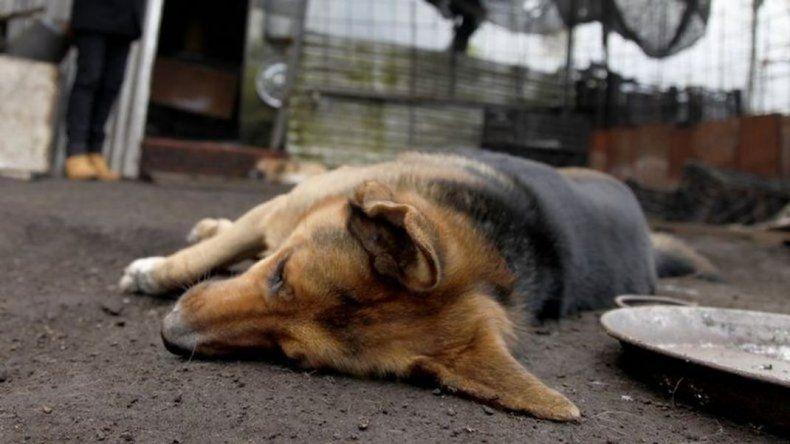 Conmoción en Kilómetro  5 por la muerte de 15 perros envenenados