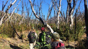 se plantaron 11.000 arboles para recuperar el bosque nativo de cholila