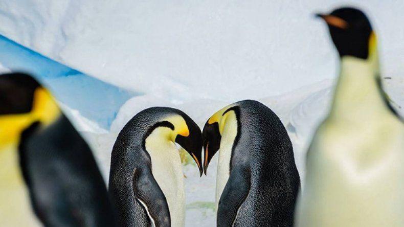 Miles de pingüinos murieron producto del deshielo en la Antártida