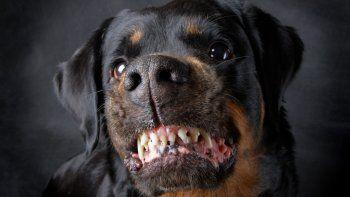 Dos perros casi matan a una nena de 4 años con hipoacusia