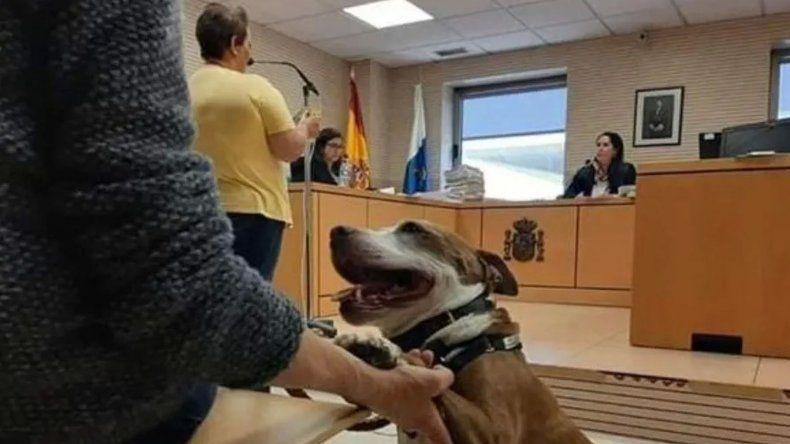 Una perra es testigo en un juicio por maltrato animal