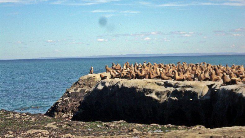 Concejales se pronunciaron en defensa del Área Natural Punta del Marqués