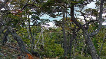 caminos del fuego, un circuito que contiene las  mejores vistas en otono