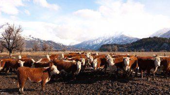 Los Murmullos desarrolla un programa para producir carne atendiendo las restricciones y exigencias alimentarias y climáticas de la zona.