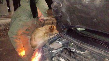 un perro detecto cannabis en el motor de un auto en un control de rutina