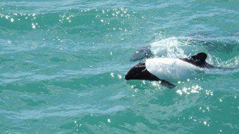 charla sobre cetaceos y mamiferos marinos en punta marques