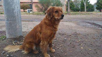 una perrita espera hace un ano a su dueno afuera de la comisaria