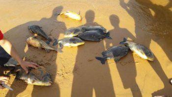 desastre ambiental en el litoral por el apagon