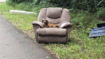 Perro abandonado casi muere de hambre esperando que vuelvan a buscarlo