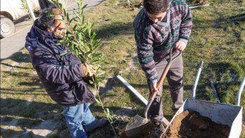 En Restinga Alí avanza un plan de forestación