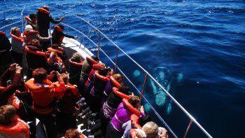 peninsula valdes nominado a mejor destino de avistaje de ballenas lider en sudamerica 2019