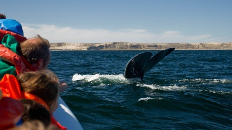 Península Valdés nominado a mejor destino de avistaje de ballenas líder en Sudamérica 2019