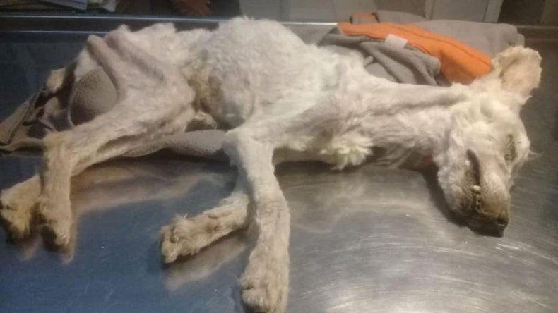 Presentarán una denuncia penal por los perros abandonados