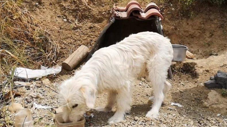 Un perro vive hace más de un año en el lugar donde murió el dueño