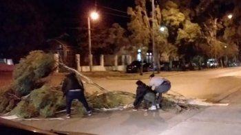La caída de grandes ramas sobre la avenida Tehuelches, en Kilómetro 3, producto del viento.
