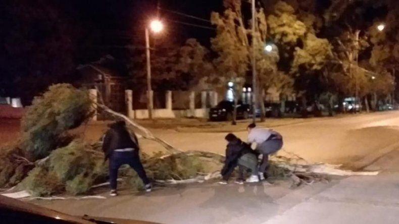 La caída de grandes ramas sobre la avenida Tehuelches