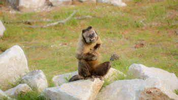 Un safari terrestre para el avistaje  de diferentes especies protegidas