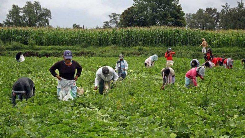 Casi la mitad de los puestos de trabajo en el campo son precarizados