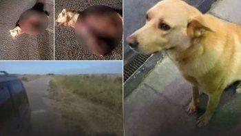 ato a un perro a su vehiculo y lo arrastro hasta matarlo