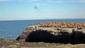 punta marques, nuevo atractivo turistico de la costa chubutense