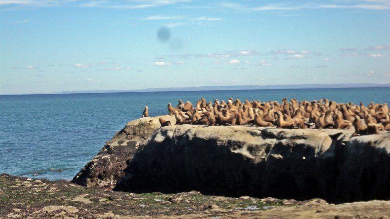 Punta Marqués, nuevo atractivo turístico de la costa chubutense