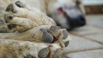 Mataron a más de 60 perros envenenándolos