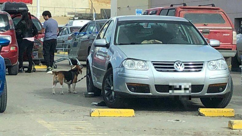 Sin sentido: dejó a su perro atado afuera del supermercado por horas