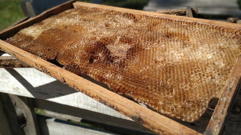 Una vuelta por el universo de  la miel y las abejas en Colón