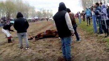 murio una yegua en plena carrera y denuncian maltratos