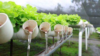 Buscan expandir la experiencia de los cultivos hidropónicos en la zona norte de Comodoro Rivadavia.