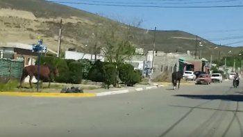 Denuncian presencia de caballos sueltos en las calles de Laprida