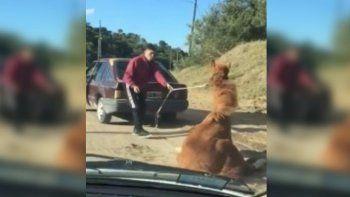 Ató a un caballo a su auto y lo arrastró hasta que se desplomó