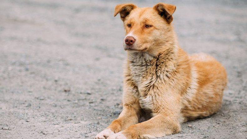 Lo acusaron falsamente de matar un perro  a balazos y la Justicia limpió su nombre