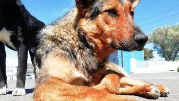 La policía investiga el caso del perro degollado en Rada Tilly