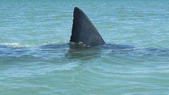 en rio gallegos la sangre vertida por los frigorificos atrae tiburones